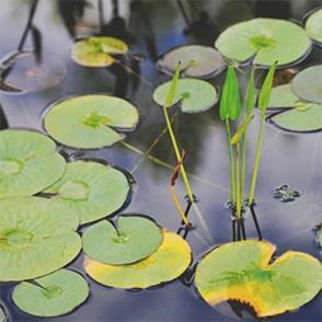 Byliny trawy i rośliny wodne