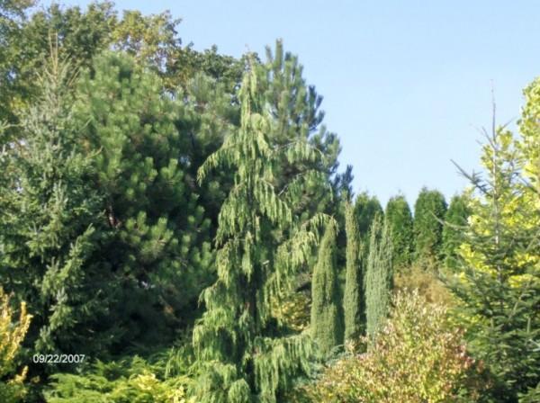 powierzchnia-ogrodowa-13